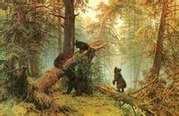 早晨的大森林,朝雾弥漫图片