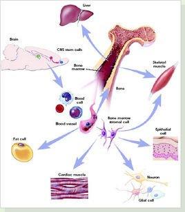 高一生物细胞三维结构图