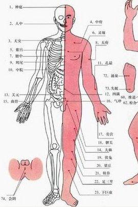 局部解剖:有肛门动,静脉分支