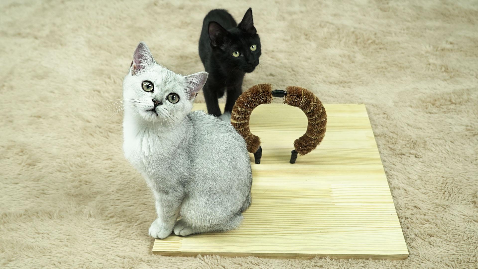 DIY猫咪梳毛器【举起爪儿来】