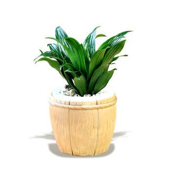 植物根的次生结构示意图