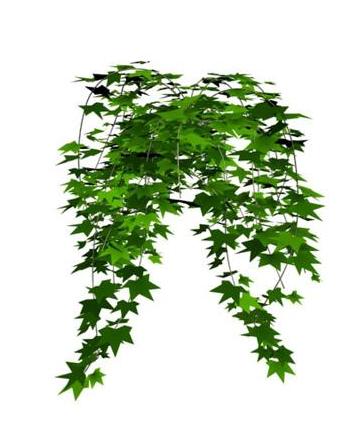 盆景 盆栽 植物 360_448 竖版 竖屏