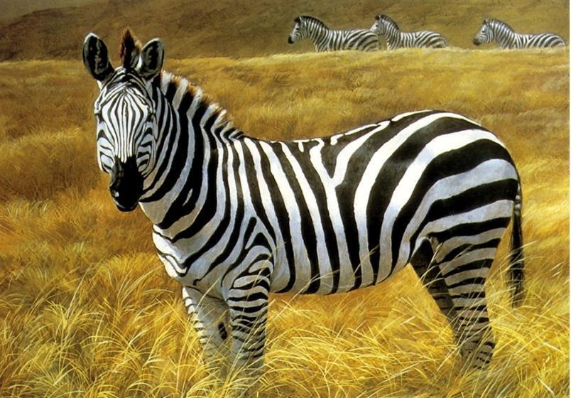 壁纸 动物 马 骑马 804_560