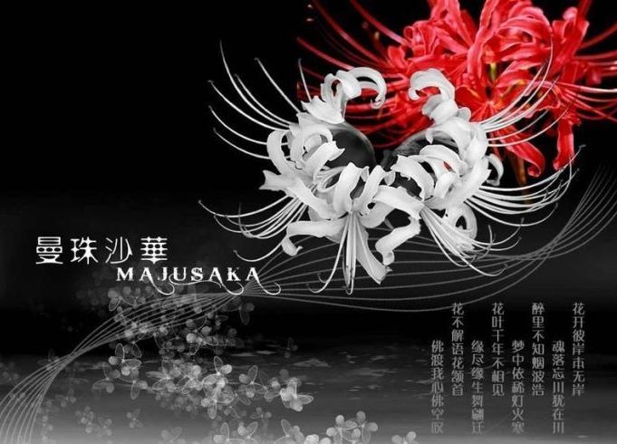 曼珠沙华(红色彼岸花)