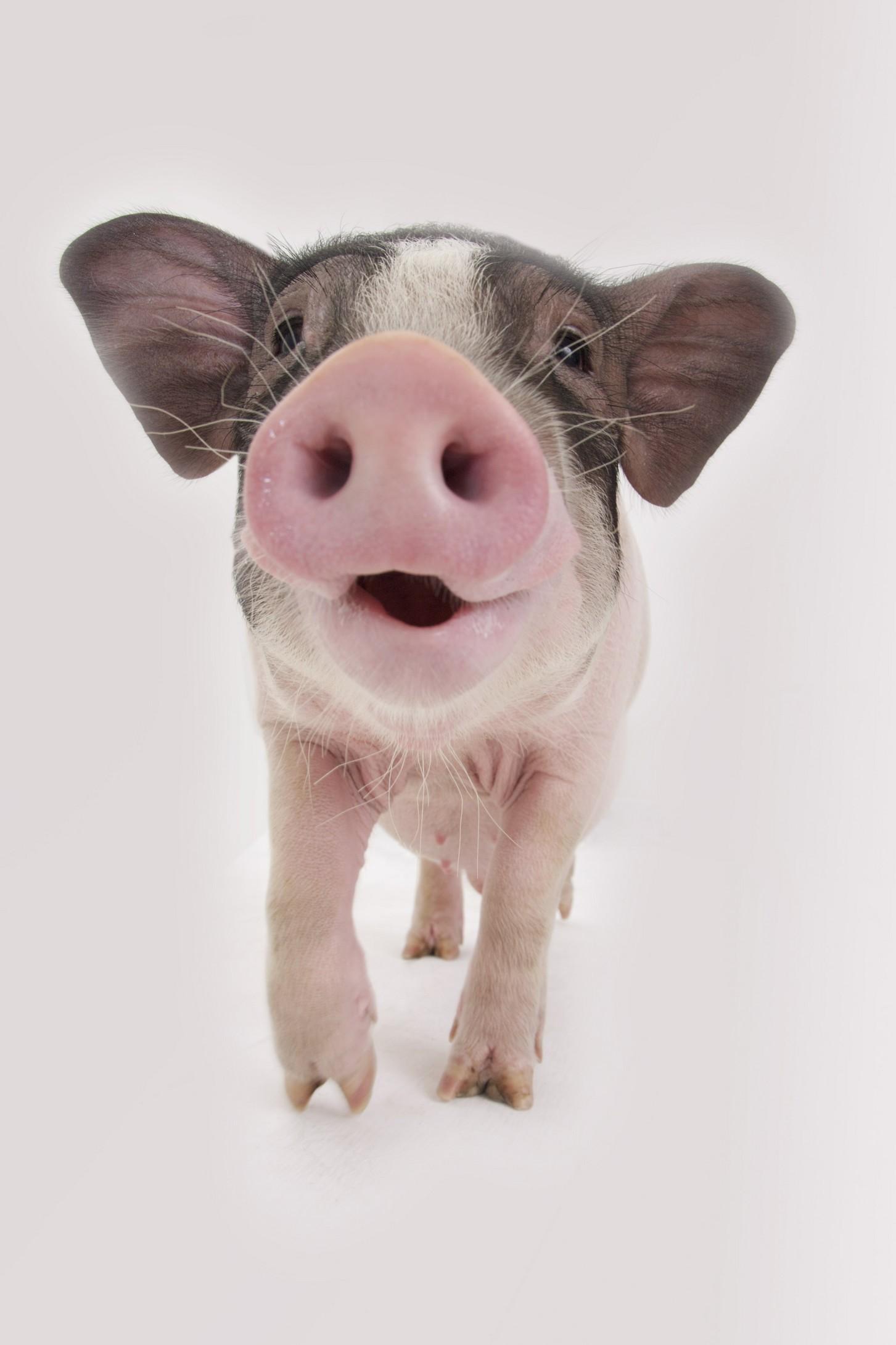 猪花馍做法大全带图解
