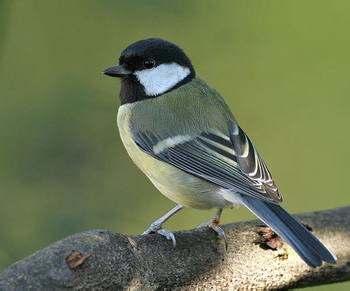 飞行速度最快的鸟:尖尾雨燕平时飞行的速度平均为170