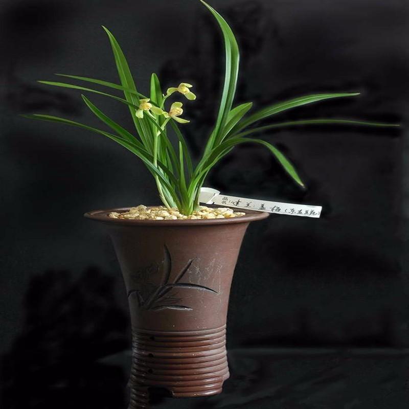 养兰花不能养这5个品种不是一般难养图片