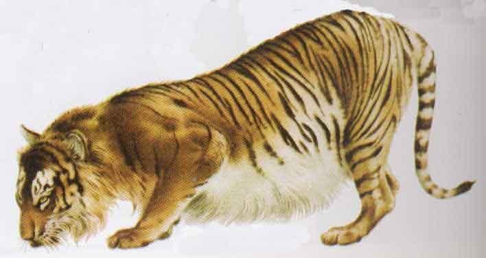 虎 简单霸气 粉笔画