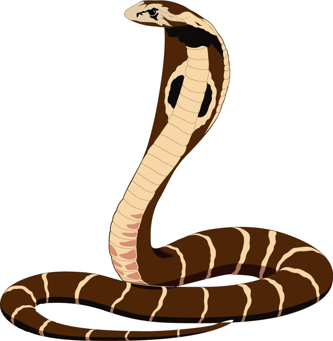 最可爱的真蛇