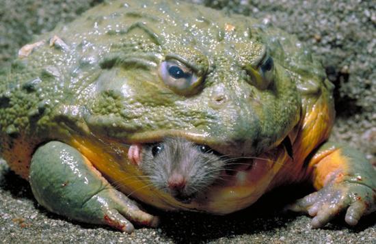 蛙心脏实验手绘图
